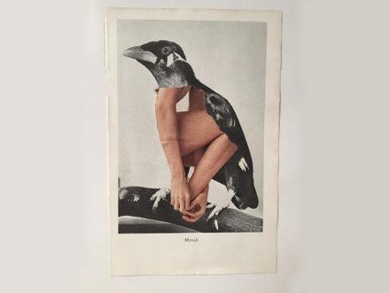 Mwy o wybodaeth: Collage: Ceisiadau Cystadlu
